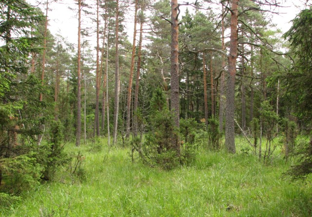 Alvar forests in Rapla county