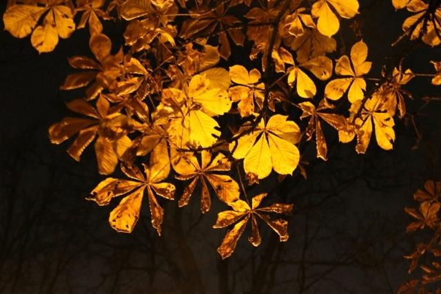 A chestnut in Tartu in autumn