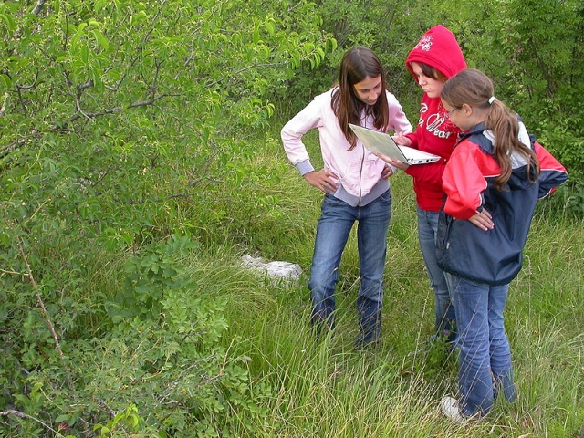 Identifying plants in the forest