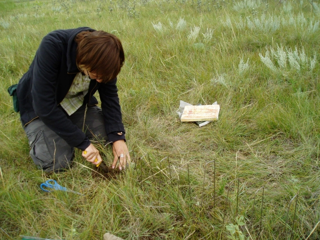 Inga Hiiesalu doing the fieldwork
