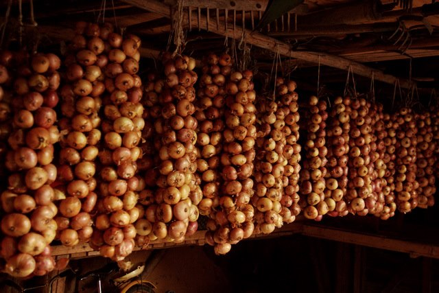 Onions. A traditional way of preserving them.