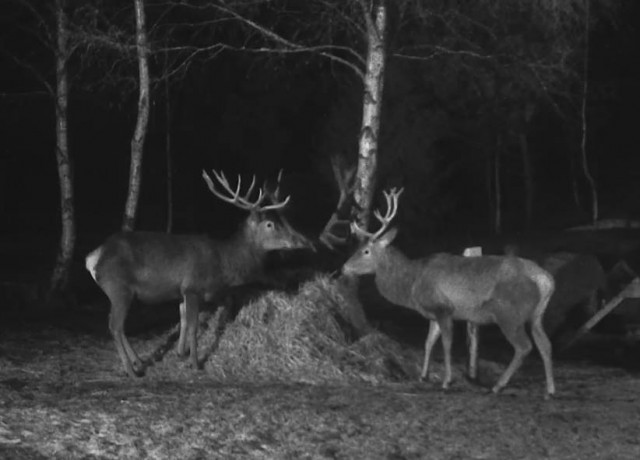 Deers' webcam view