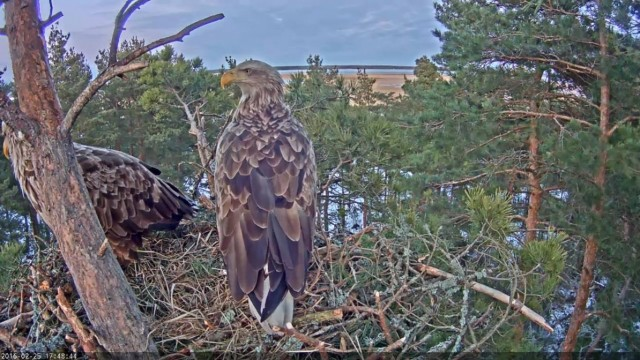 Eagles' webcam view