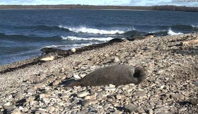 Seals' webcam view
