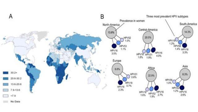 the spread of papilloma virus